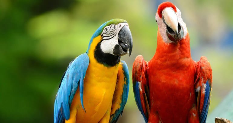 Blue and yellow Macaw longest living animals - Animals with longest lifespan | Top 10 longest living animals