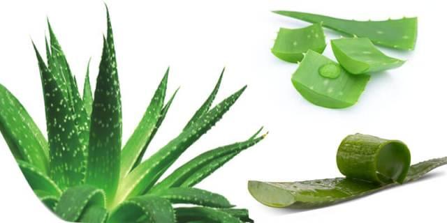 Ways You Can Start Using Aloe Vera