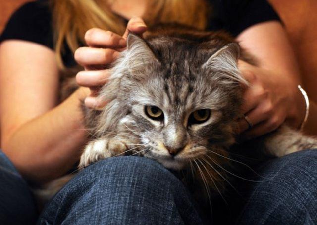 Cat kneading legs