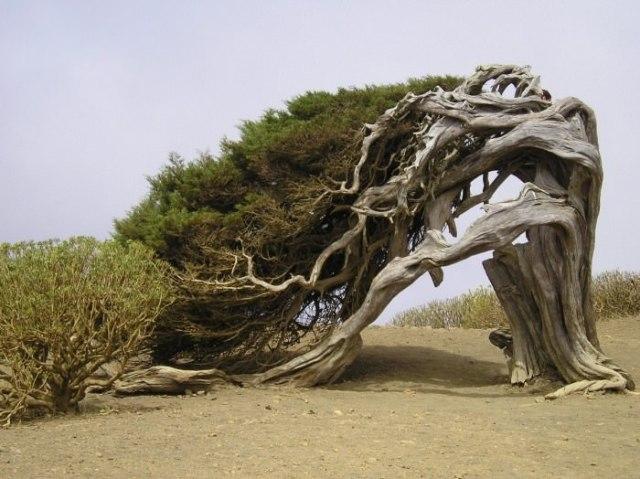 El Arbol de la Sabina unusual and strange trees