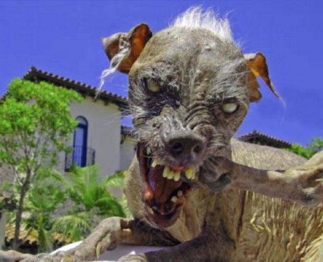 Scariest Monsters Chupacabra