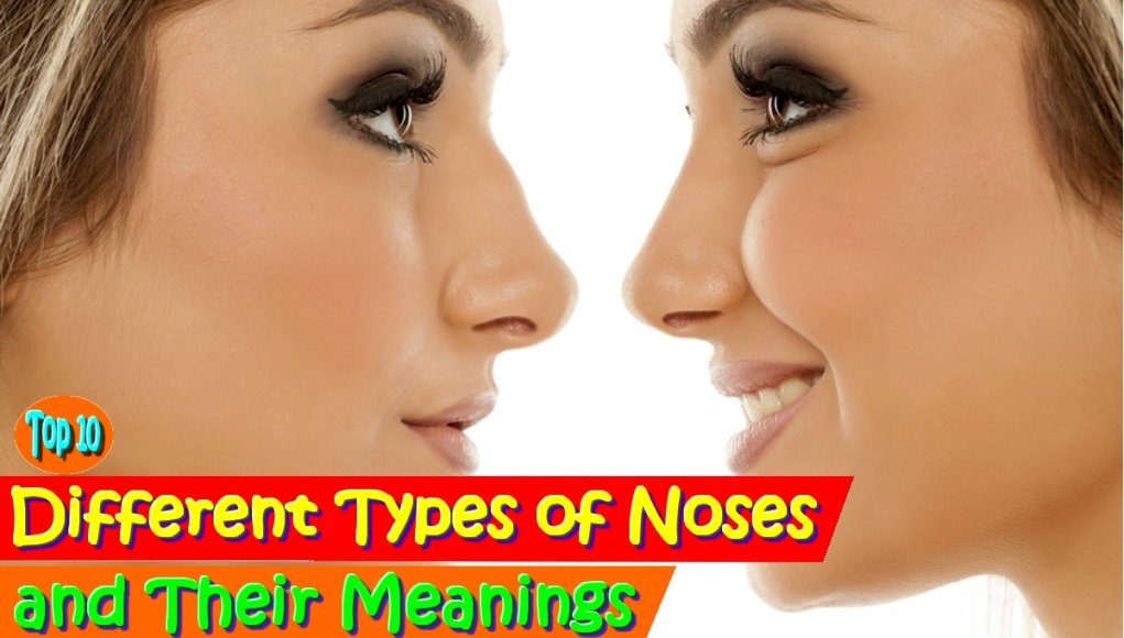 Different Types of Noses and Their Meanings