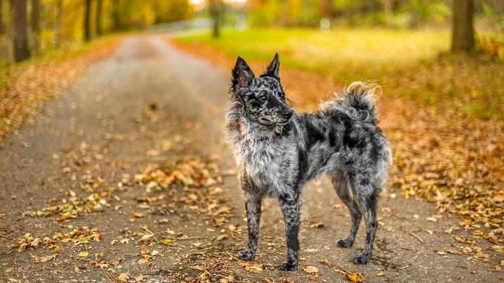 Most Unique Dog Breeds