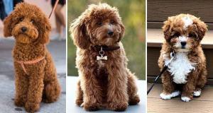 Family-Dog-Breeds-Best-Family-Dogs