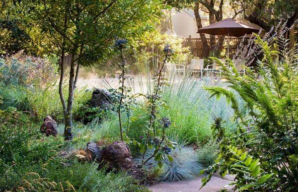 Native Plants Backyard
