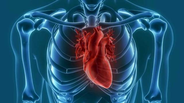 Theory of Human Cardiovascular Disease