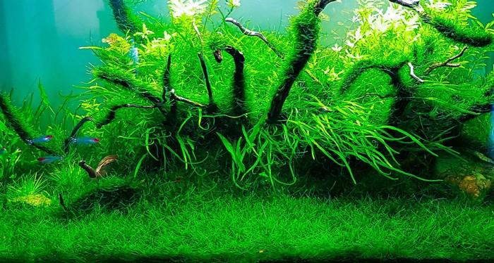 best aquarium plants