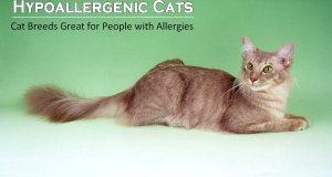 10 Hypoallergenic Cats