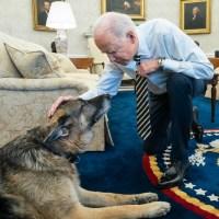 Joe Biden, Champ the dog