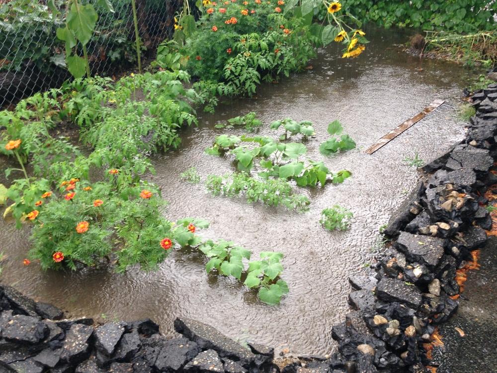 flooded-garden