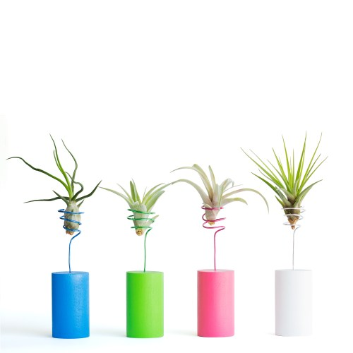 Air Plant Wire Vases Colorful Wire Vases For Your Shelf End Table