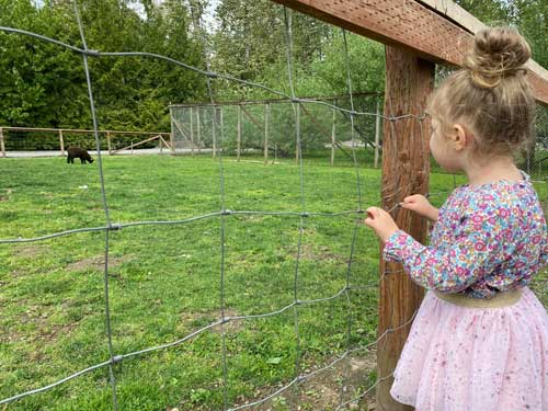 A toddler holds onto a wire fence, looking at a black lamb chewing grass in a green field