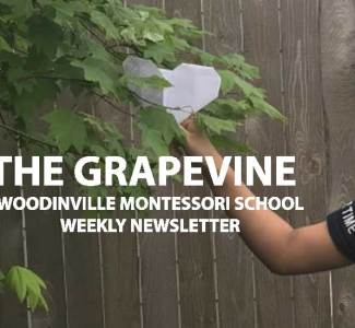 The Grapevine, May 20, 2020