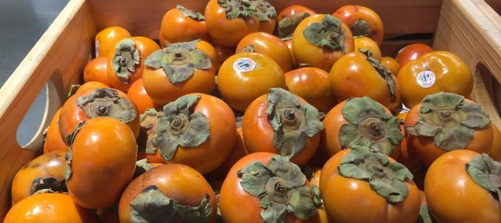 Persimmon Season in Full Swing