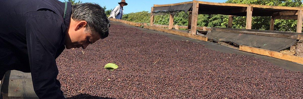 Coffee of the Month: El Salvador Finca Himalaya