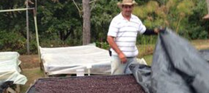 Coffee of the Month: Costa Rica Altos del Abejonal Natural