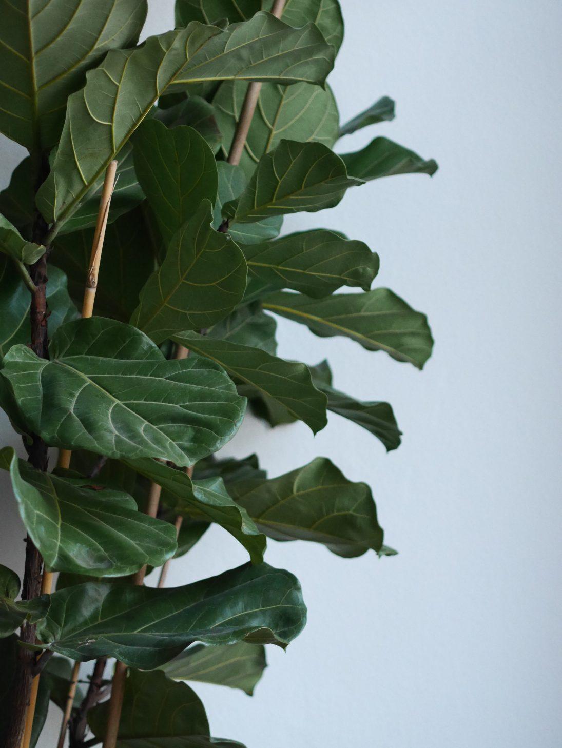green-blog-woodmoodfood-strasbourg-lifestyle