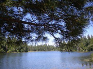 View over Woodridge Lake in summer