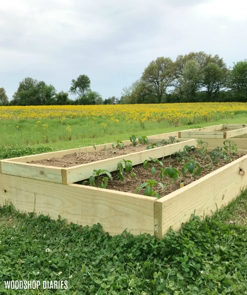 How to Build Your Own Raised Garden Beds