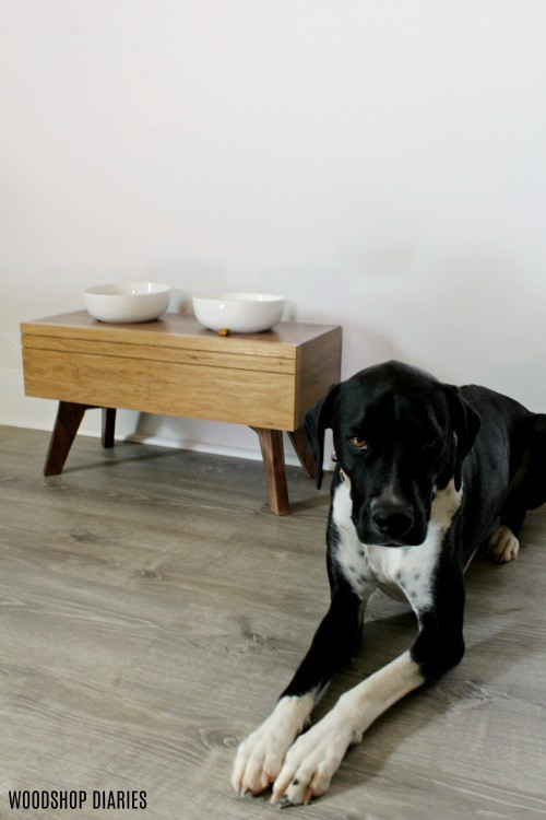 Lucy lying next to her modern dog bowl stand with white ceramic bowls