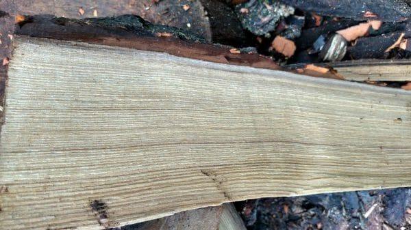 sassafras firewood