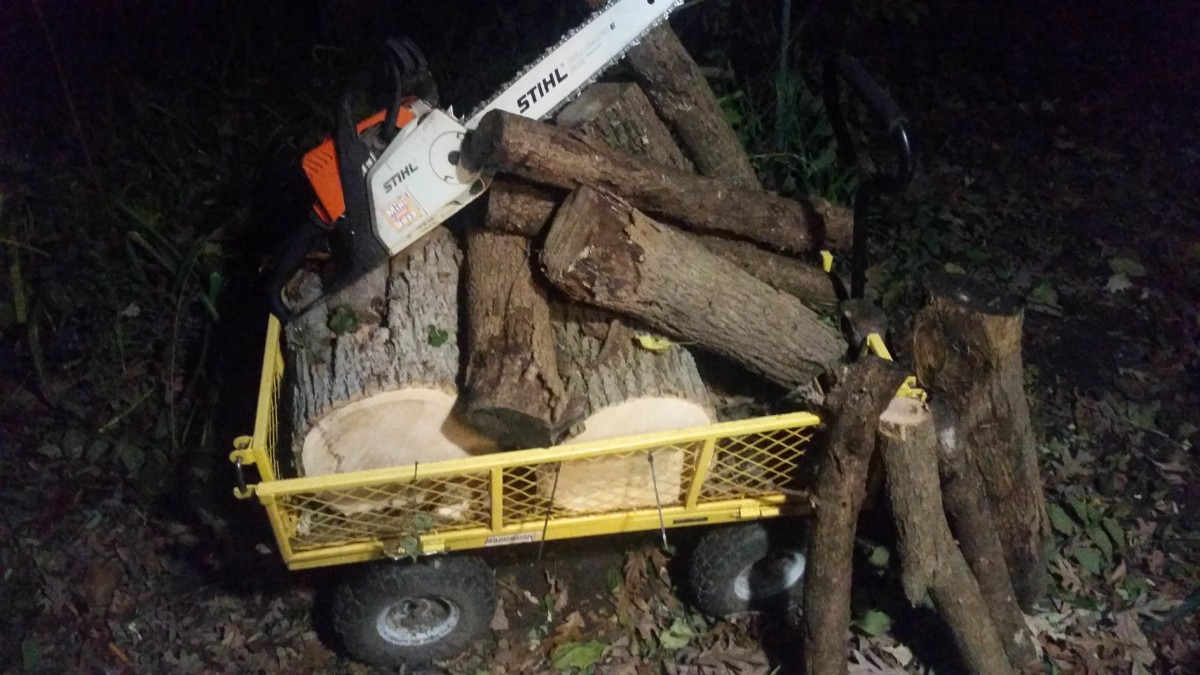 Harvesting An Ash Tree For Woodturning Cutting Bowl Blanks From Logs