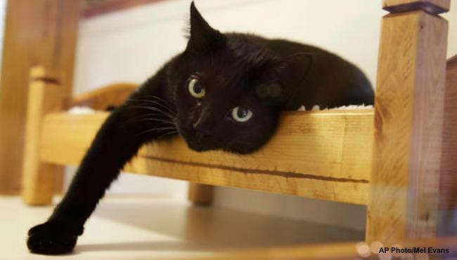 generic cat_287579
