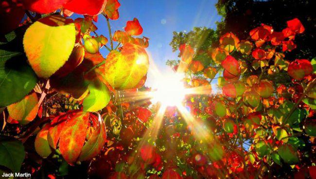generic fall colors generic fall leaves_125532
