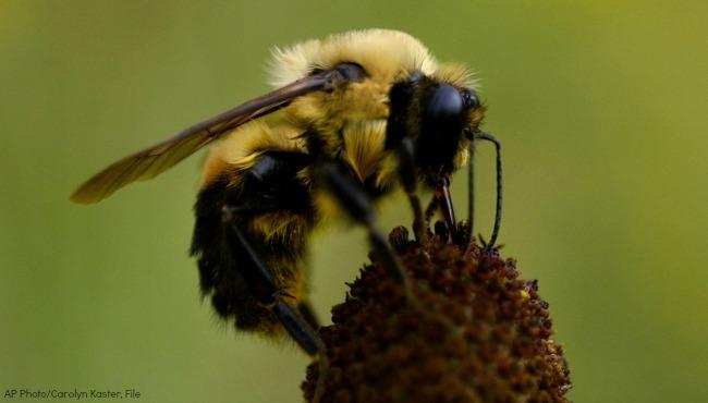 Bumblebee-AP Generic_90313