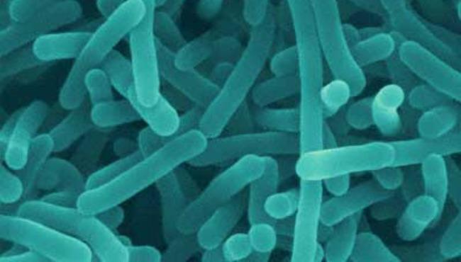 Listeriabacteria_90065