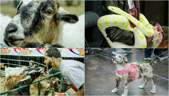 pet expo collage 04062019_1554590746107.jpg.jpg