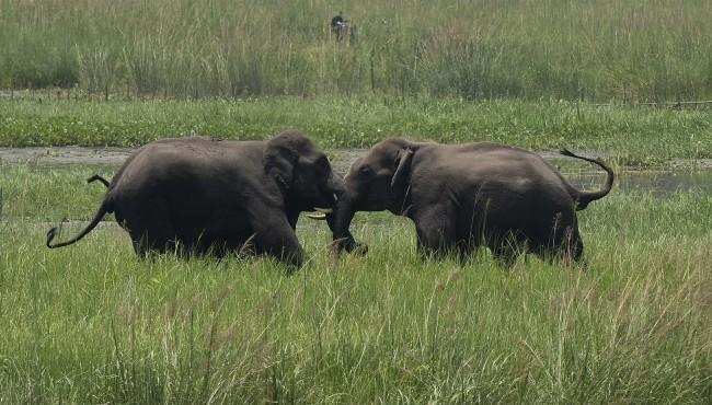 India elephants AP 050619_1557140494565.jpg.jpg