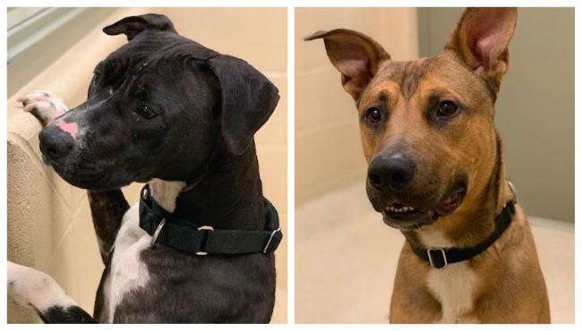 KCAS pets of the week Muna Hudson 051019_1557512529966.jpg.jpg