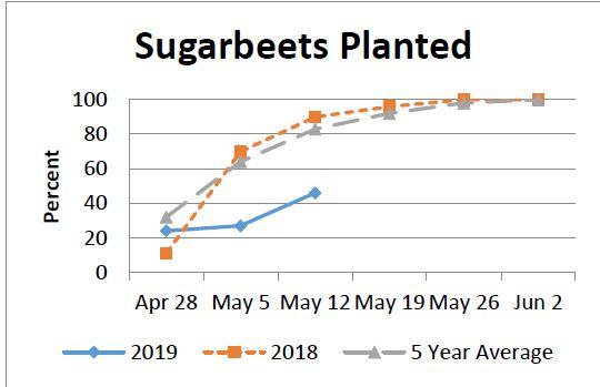 sugarbeets_1557889790695.JPG