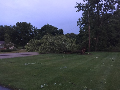 A fallen tree took down a power line in Byron Center during the severe weather. Courtesy of Kayleigh Dumond.