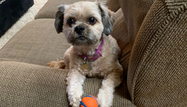 To celebrate National Dog Day, News 8 staffers shared photos of their canines. Above is a photo of Meterlogist Ellen Bacca's dog, Georgie Girl, who is described to have a low IQ, but high cuddle potential.