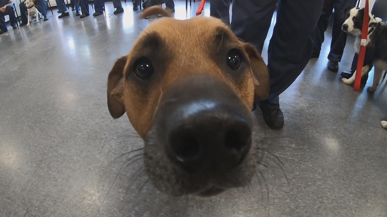 Rescue dog prison rehab program