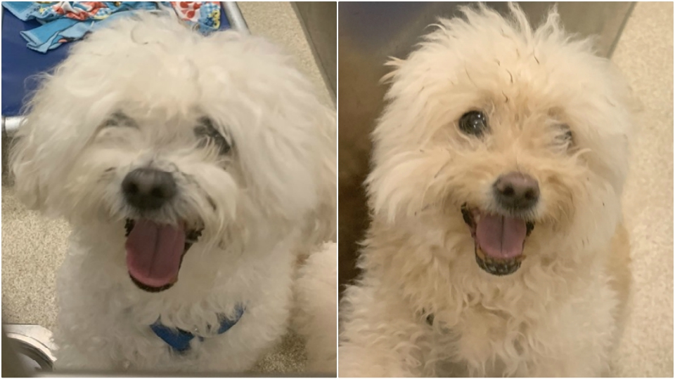 pets of the week booboo and taffy