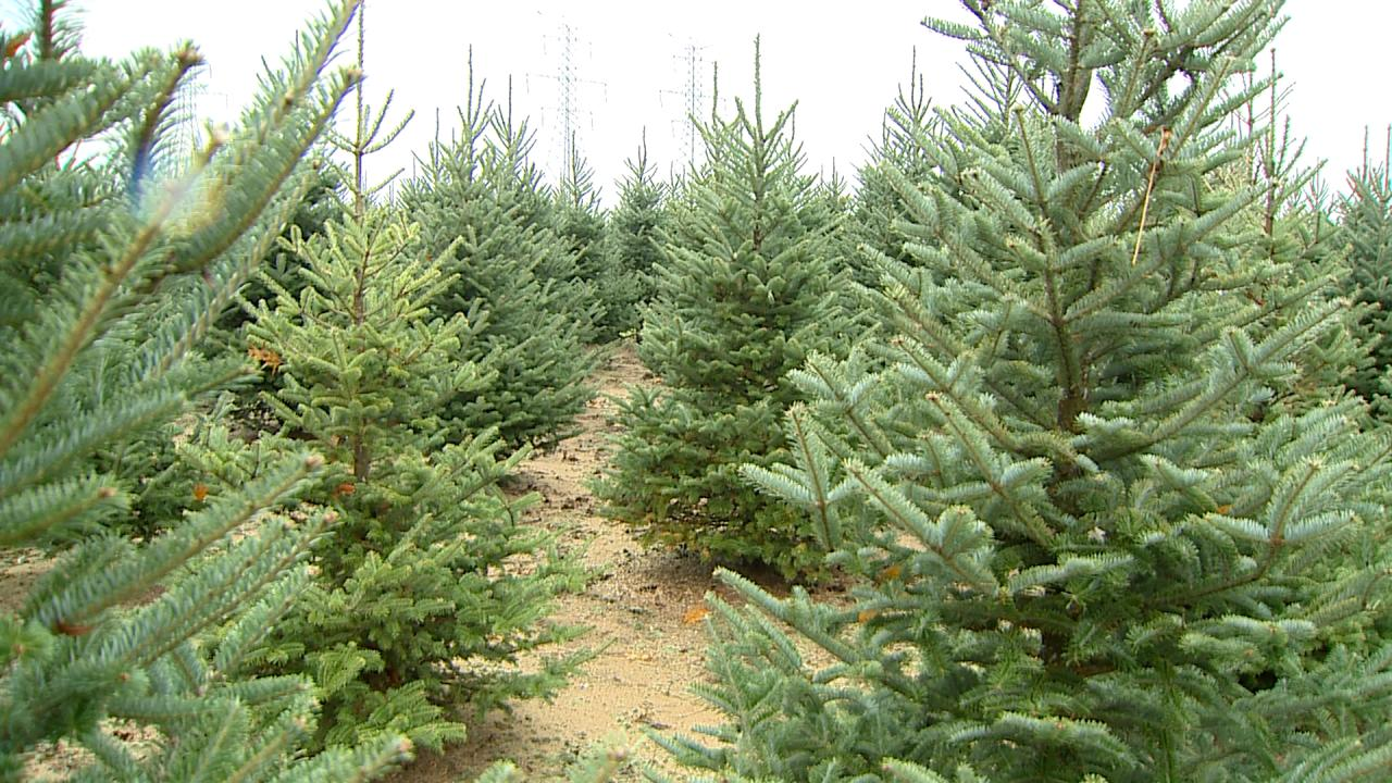 Vormittag Tree Farm