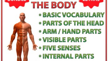 Basic Parts of the Body in Spanish Word Search     Woodward