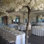 Canopy-trees-Merrydale-Manor-1