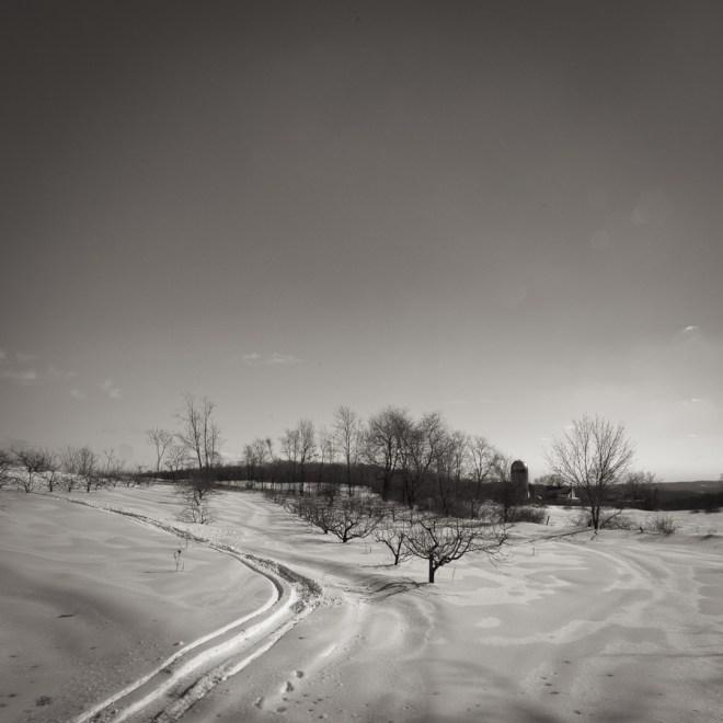 Luke Tanner's orchard