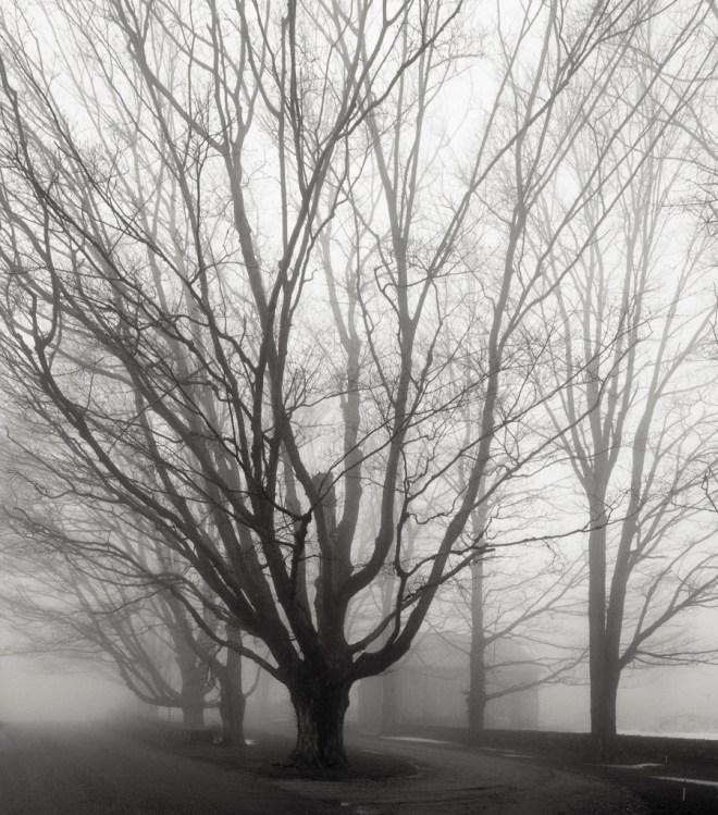 Even more fog