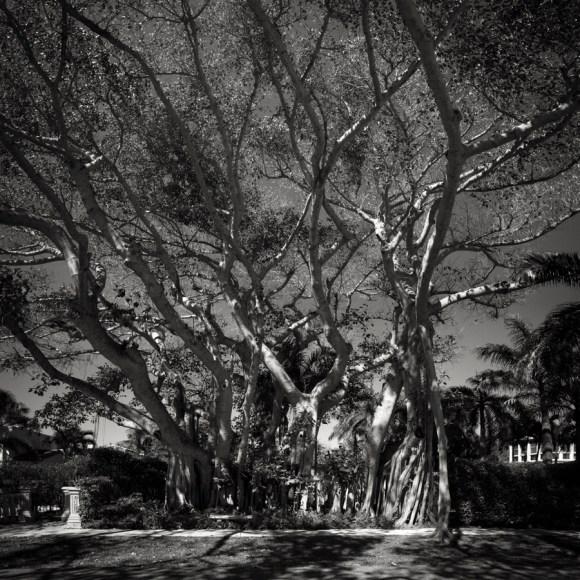 Big Mother Tree