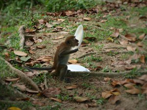 Monkeys Penang National Park
