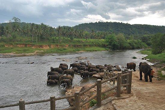 World Asia Sri Lanka Elephant Orphanage in Pinnawala www.woodyworldpacker.com