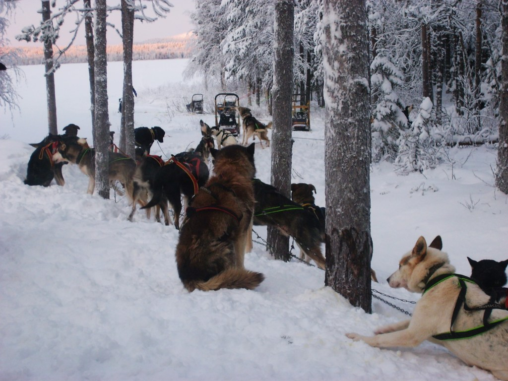 Husky Safari Finnish Lapland