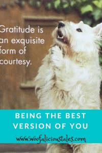 white terrier begging with gratitude is an exquisite form of courtesy saying