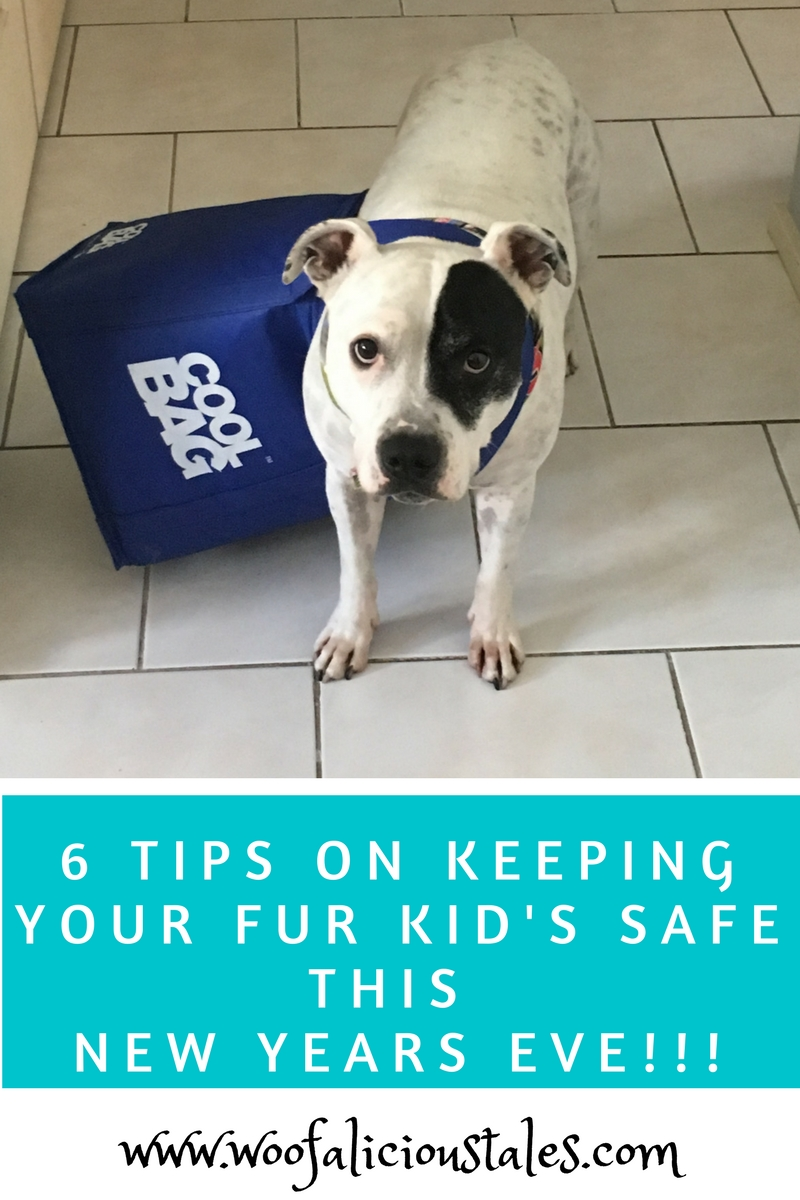 white staffy with black patch on left eye Woolworths blue cooler bag
