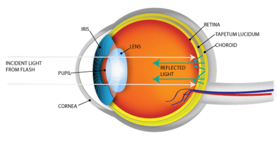 Diagram showing flash of light in retina